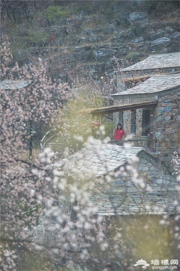 京郊踏青好去处,睡在桃花屋+乡趣野餐,溜娃人气胜地![墙根网]