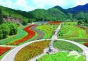 十万亩农田花海环绕京城 吸引城里人走向田间