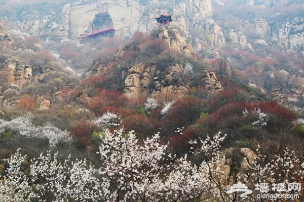五一欢乐假期圣泉山举办第四届紫藤文化节[墙根网]