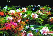 五一长假北京72处风景区赏花正当时 桃杏梨花花期将过不容错过
