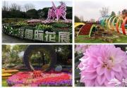 踏青赏花、看演出 去上海上这些地方玩转五一小长假