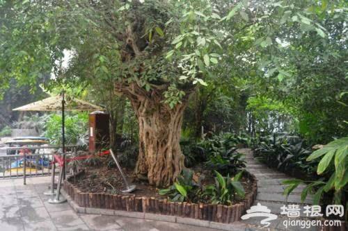天津热带植物观光园,亚洲室内建筑面积最大的热带植物观光园[墙根网]