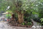 天津热带植物观光园,亚洲室内建筑面积最大的热带植物观光园