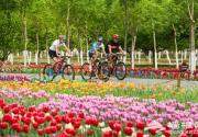 60万株郁金香在北京大兴盛放