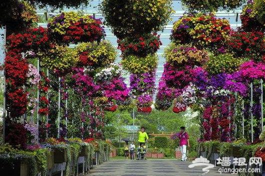 河北衡水植物园4月29日开园迎客