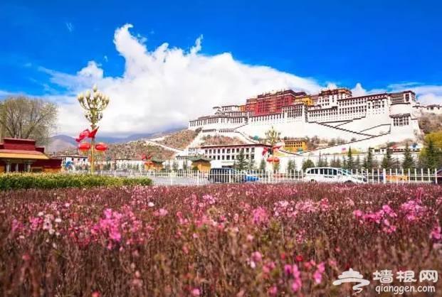 西藏比318国道更惊艳的公路,堪称史上颜值最高![墙根网]