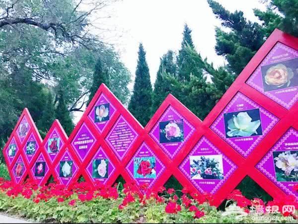 2018第十届北京月季文化节 世界花卉大观园名品月季花展开幕[墙根网]