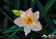 芒种时节夏花接力 上海植物园发布赏花指南