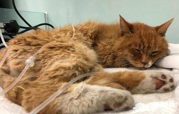 晴天霹雳!故宫猫白点儿去世罹患高血压 曾预测梅西注定要凉