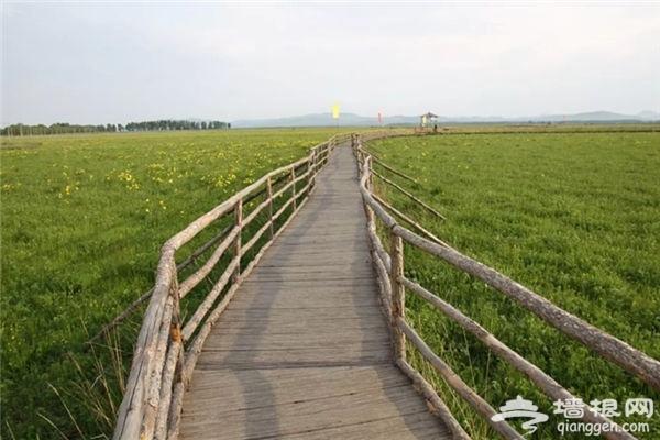 北京周边这处比草原还美的五色花海,正是一年中最惊艳的时刻![墙根网]