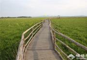 北京周边这处比草原还美的五色花海,正是一年中最惊艳的时刻!