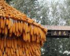 来东辛屯民俗旅游文化村寻找恬静和自然吧