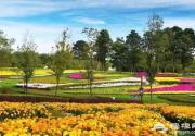 北京国际鲜花港第十届菊花文化节即将举办