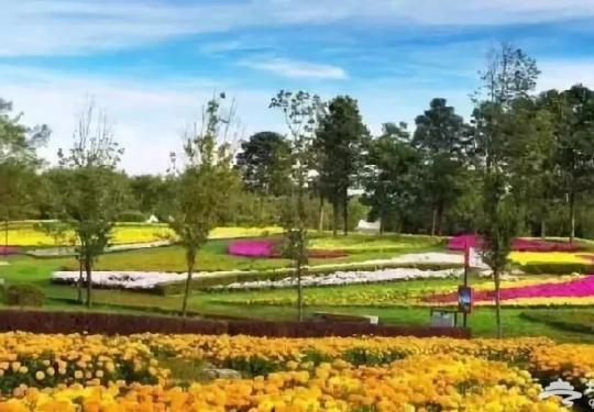 2018北京哪有菊花展?六大展区迎接参观市民