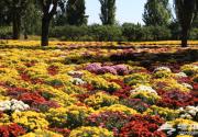 2018北京植物园菊花文化节时间、亮点、门票