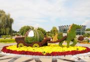 2018北京菊花展世界花卉大观园会场时间、门票、活动