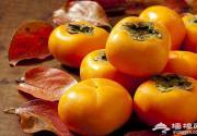 金秋映红柿,收获季节幸福满满