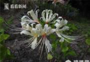 秋日临近 上海植物园九月赏花攻略出炉