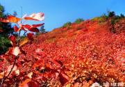 河北人 秋来时节看红叶 去这些地方就够了!