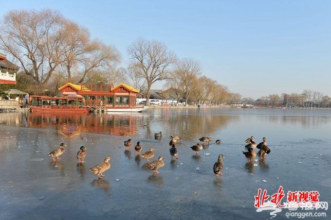 北京西海湿地公园月底迎客:中心三浮岛水生植物超30种[墙根网]