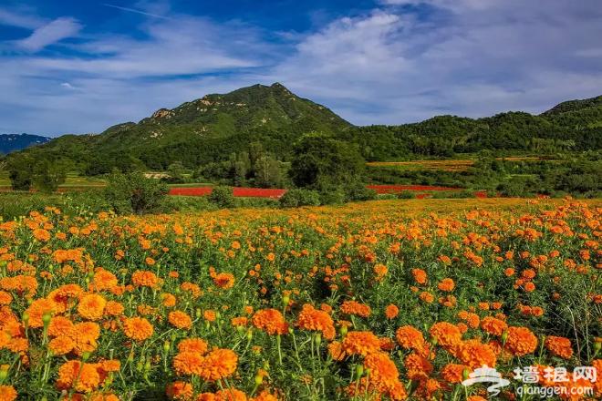 北京这片花海美到窒息!比春夏更美!再错过只能等明年……[墙根网]
