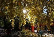 """北京11家公园推出""""中秋悦园""""游园活动 游客可赏花泛舟"""