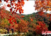 北京長城紅葉生態文化節開幕,將持續到11月4日
