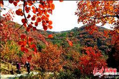 北京长城红叶生态文化节开幕,将持续到11月4日