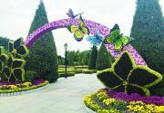 世界花卉大观园秋菊盛开满园飘香 让养菊爱好者体验斗菊乐趣