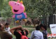 青藏神鹿白唇鹿落户北京动物园 十一国庆前夕与市民见面
