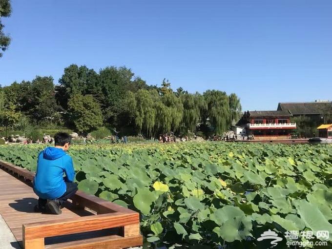 北京什刹海西海湿地公园今起开放 碧荷轩山海楼等3处堵点已打通[墙根网]