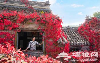 打卡京郊最美红叶圣地,红叶小镇秋季五大活动全新上线