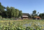 北京什刹海西海湿地公园今起开放 碧荷轩山海楼等3处堵点已打通