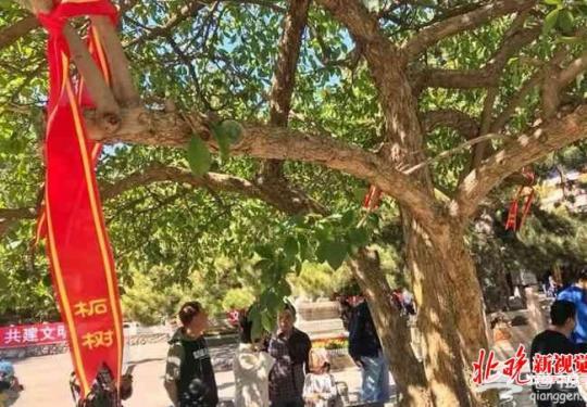 先有潭柘寺后有北京城 潭柘寺举办首届柘树文化节