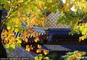 超美!再过十天!最最最美丽的北京即将呈现!让全国人都心动!