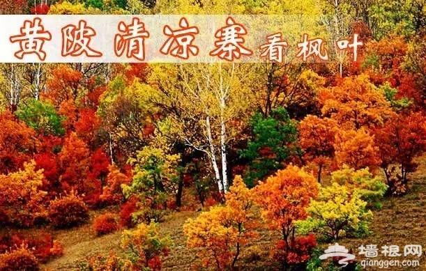 武汉秋冬季最全旅游指南(市内+室外+赏花)[墙根网]