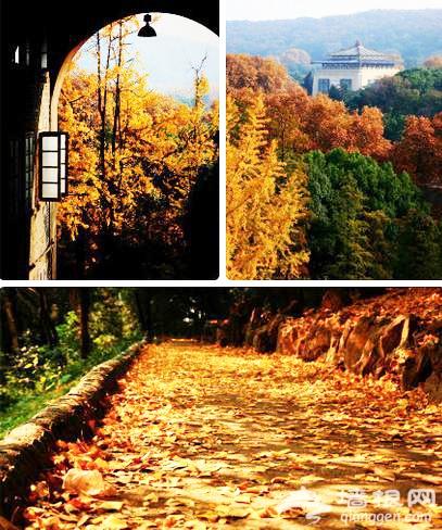 武汉秋天赏红叶去哪里 江城最好的12个红叶观赏点