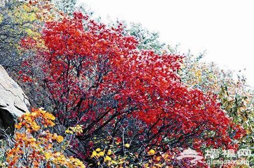 武汉秋天赏红叶去哪里 江城最好的12个红叶观赏点[墙根网]