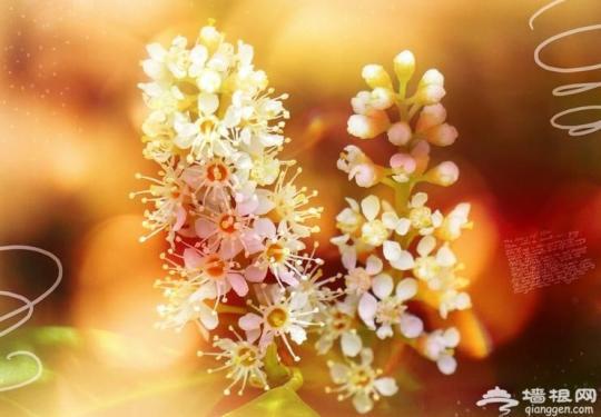 武汉周边秋季赏花地图 周末好去处