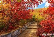 房山赏红叶:坡峰岭、上方山、十渡、韩村河