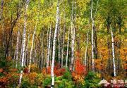 怀柔赏红叶:喇叭沟、红螺寺、慕田峪长城、圣泉山、水长城
