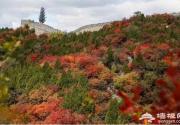 深秋时节,延庆漫山红叶在等你