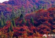 海淀赏红叶不止有香山 这7个景区秋景也美如油画