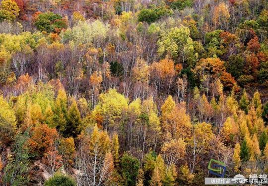 多种拍摄思路解析 让你拥有拍不完的京城秋色