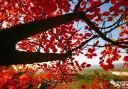 2018北京金海湖红叶观赏季(时间+门票+活动)