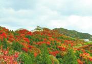 北京八达岭国家森林公园红叶秀丽 最佳观赏期直持续至十月底