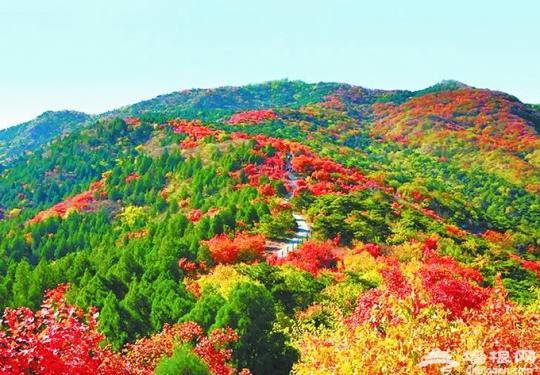 北京西山国家森林公园秋色正好 远景赏红叶令人陶醉