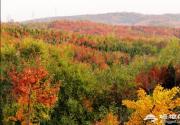 京郊森林公园赏红叶,色彩叠加秋色烂漫