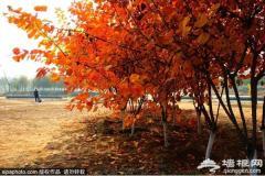 冷门又免费!北京周边6个红叶观赏地,最快半小时就到!