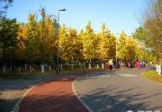 不拍银杏枉秋天,北京城区众多银杏观赏地大搜罗